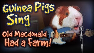 New Games Like Guinea Pig Town Recommendations