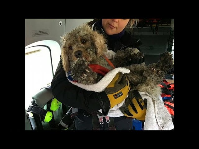 Lucky dog rescued in Scotland by helicopter crew on training exercise
