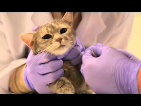 Школа ассистентов ветеринарного врача