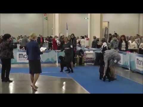 Black Standard Schnauzer: IDS President RKF Cup 2019, Best Of Breed