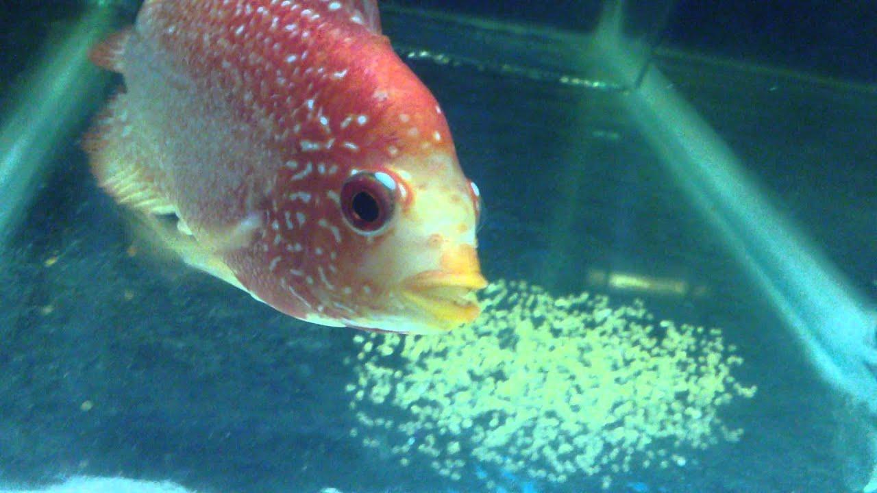 Fish aquarium how to maintain - Tank Maintain By Narayan Ganguly Sona Plants Aquarium Youtube