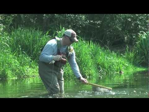 Tennessee Fly Fishing