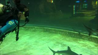 Fiona Callaghan diving with Hammerhead Sharks in Seaworld Indonesia