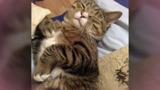 Мой котик Том :3/// милашка /// фото + видео про тома///