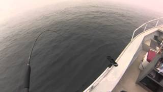 10/26/13 Lingcod Fishing in Santa Cruz,CA
