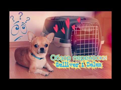 Переноска в самолет | Видео обзор | Переноска для собаки IATA