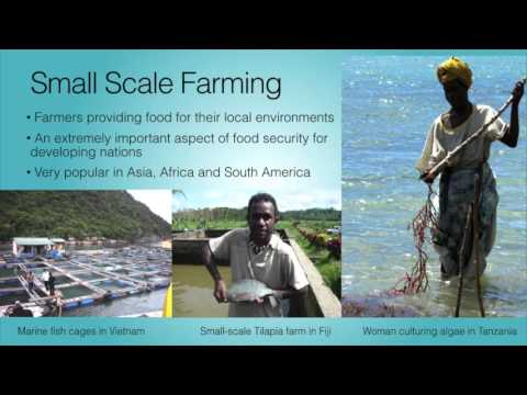 Aquaculture: How Humans are Farming the Oceans