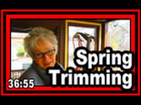 Spring Trimming - Wisconsin Garden Video Blog 749