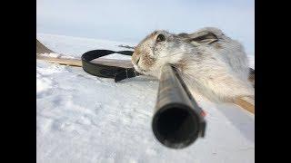 Зайцы под каждым кустом!!!  Охота на зайца 2019.  Hare hunting.