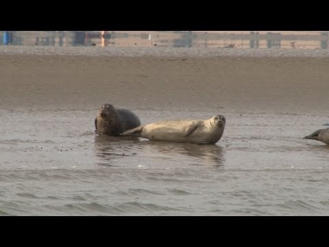 Do you know there are seals in the Thames?