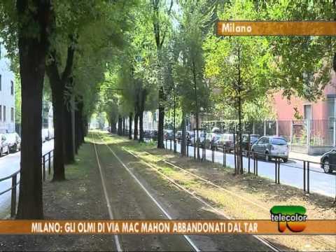 Milano: gli olmi di via Mac Mahon abbandonati dal Tar