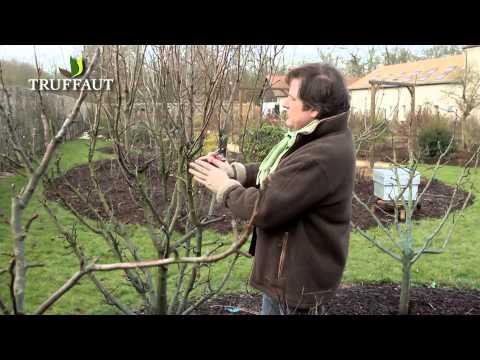Comment tailler un abricotier un cerisier un prunier doovi - Comment tailler un pecher ...