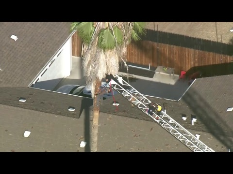 LIVE: Tree Trimmer Trapped Up A Tree