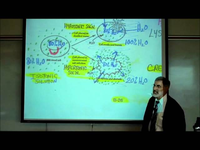 DIFFUSION, OSMOSIS & ACTIVE X-PORT ACROSS CELL MEMBRANES by Professor Fink