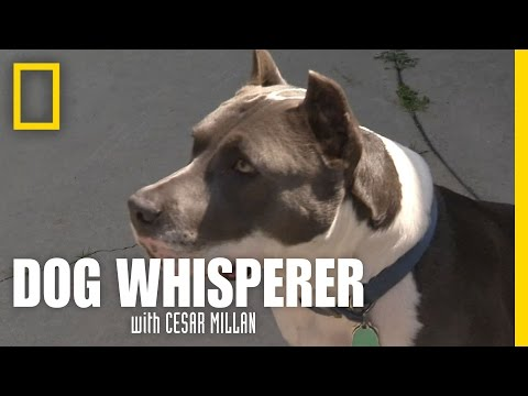 Overcoming a Fear of Dogs | Dog Whisperer