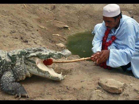 قصة طائفة -شيدي ميلا- الصوفية مع التماسيح المقدسة في باكستان  - 16:23-2018 / 3 / 11