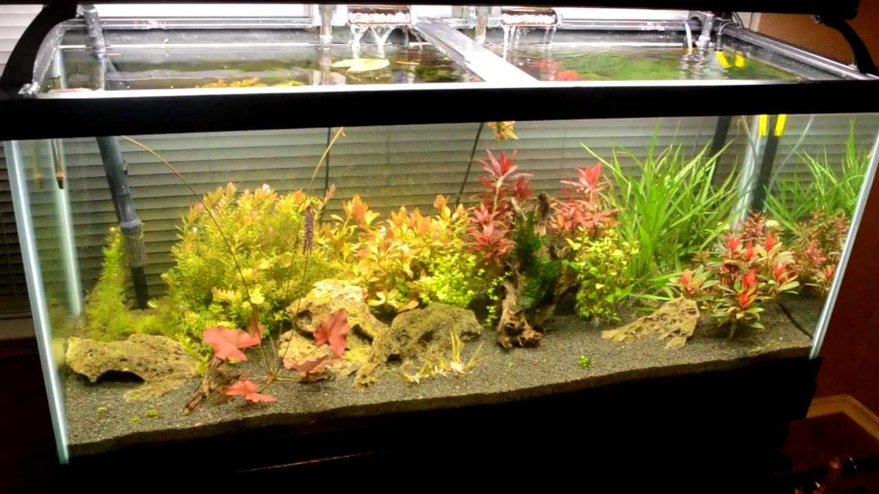 Fish less planted tank youtube for Fish tank youtube