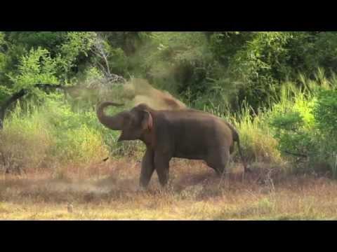 Travel Inspiration: Sri Lankan Elephants