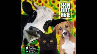 Подсолнухи - Животные (Official Audio)