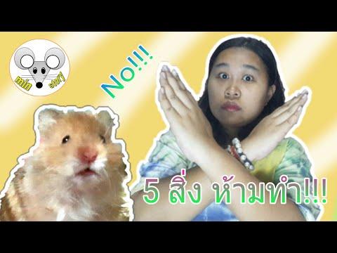 5 สิ่งห้ามทำแฮมสเตอร์ไม่ชอบ!!!!