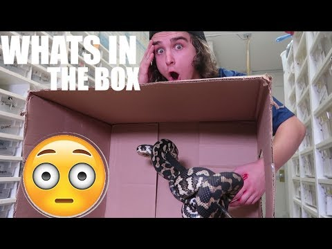 WHAT'S IN THE BOX CHALLENGE! *SNAKE BITE EDITION* :BadChoiceNoah