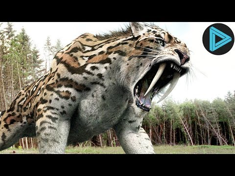 10 Most Powerful Animals In The World