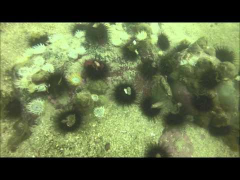 Diving in Peru