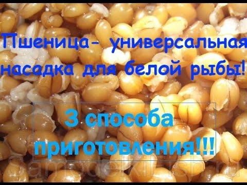 как приготовить пшеницу для рыбалки на карася