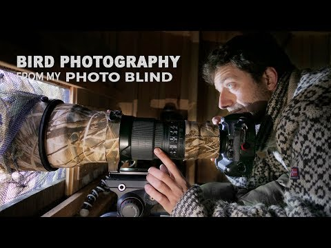 BIRD PHOTOGRAPHY from my PHOTO BLIND | Behind the scenes