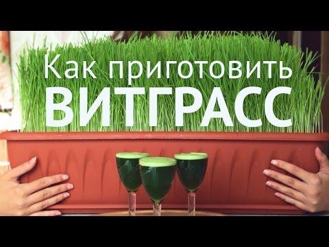 Сок ростков пшеницы и ячменя. Доставка по Украине.