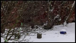 Meisen im Winter - Canon EOS R…