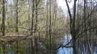 Relaxing Nature Scenes - In The Forest In Summer, Winter And Spring Seasons