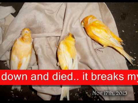 Pesticides Killed My Canaries