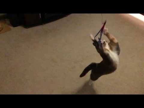 Pixel the cat fails