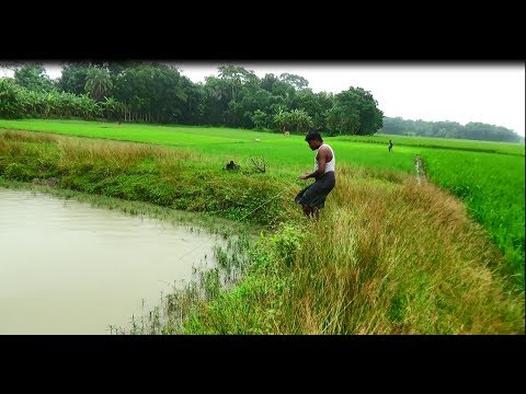 Net Fishing with beautiful nature | Real Village Fishing by Daily Village Life (Part-2)
