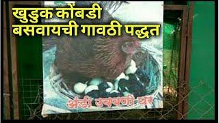 Natural hatching process of eggs step 1 गावराण कोंबडी बसवण्याची सोपी पध्दत