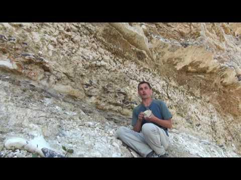 Stevns Vid9 Paleogene Fossils