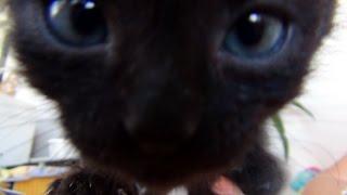 Милейший Котенок Макс! The Cuttiest Kitten Ever