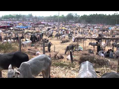 Largest Cattle fair in India : siddaganga jathre