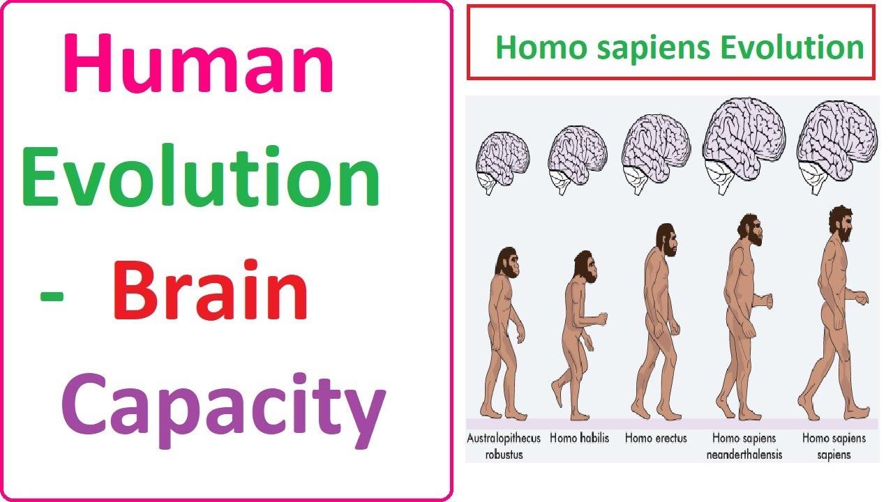 Evolution of man --test 3