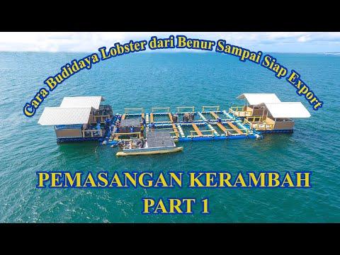 cara-budidaya-lobster-air-laut-dari-benur-sampai-siap-export-(pemasangan-kerambah)-part-1