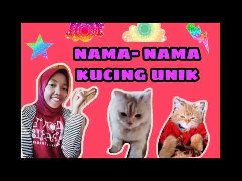 Nama Untuk Anak Kucing Betina Yang Bagus Cantik Lucu Imut Terbaru Huruf Depan H Youtube