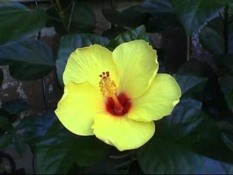 Sbocciare di un fiore youtube - Immagini di fiori tedeschi ...