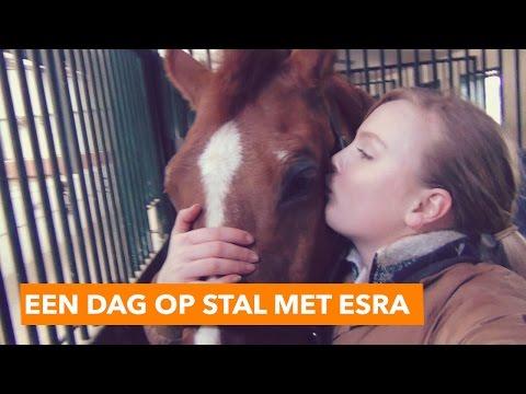 Een dag op stal met Esra | PaardenpraatTV