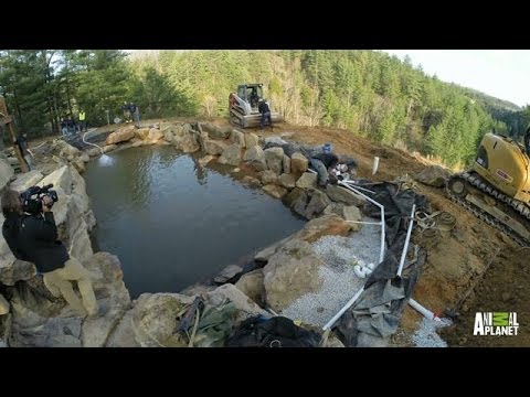 Time lapse cliffside pool the pool master youtube for Pool show on animal planet