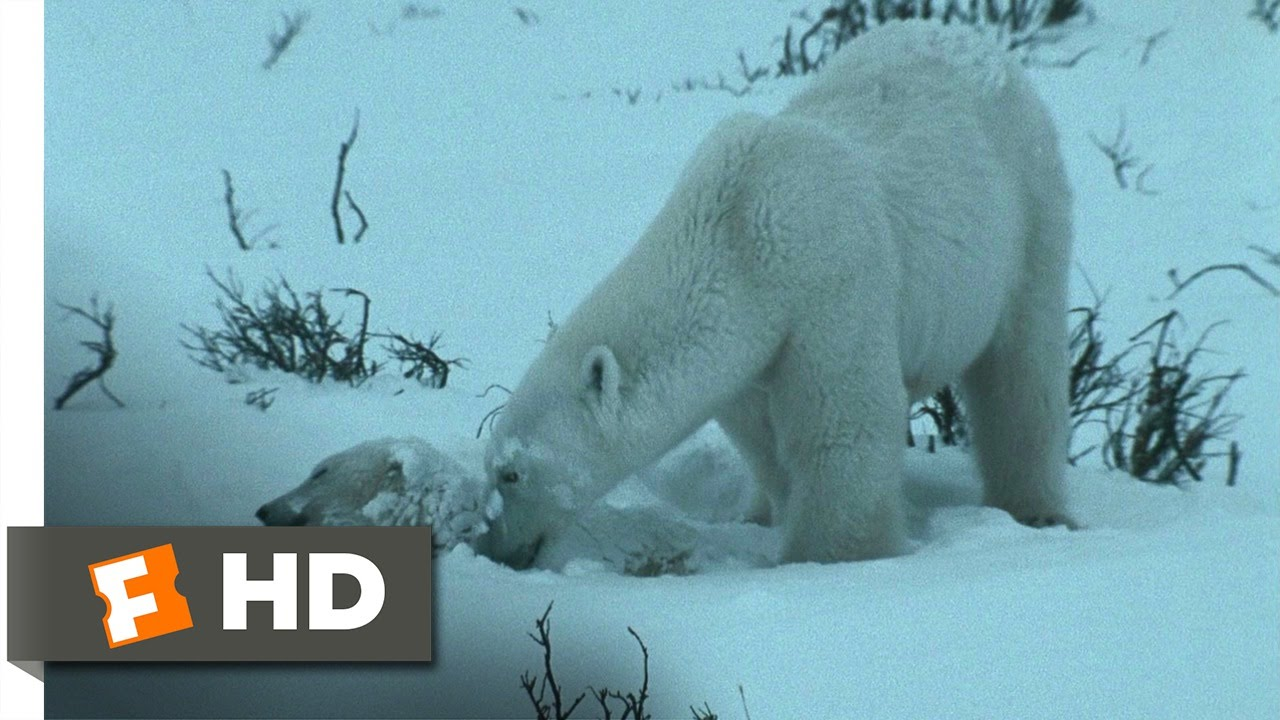 Download Arctic Tale (5/10) Movie CLIP - Starving in the Blizzard (2007) HD