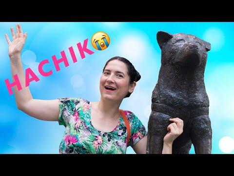 """EL VIDEO MÁS HERMOSO Y CONMOVEDOR DEL MUNDO """"Perras arriesgando sus vidas por sus cachorros"""" from YouTube · Duration:  3 minutes 34 seconds"""