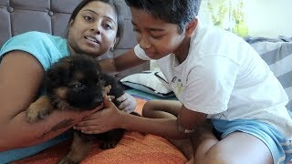 Indian mom Morning to Night Routine -  Oscar (our new pet) k sath hamara naya routine
