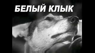 Белый Клык (1946)