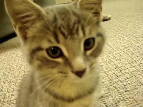 Animal Cruelty 1 -- Fort Wayne BB-Gun-Paralyzed Kitten